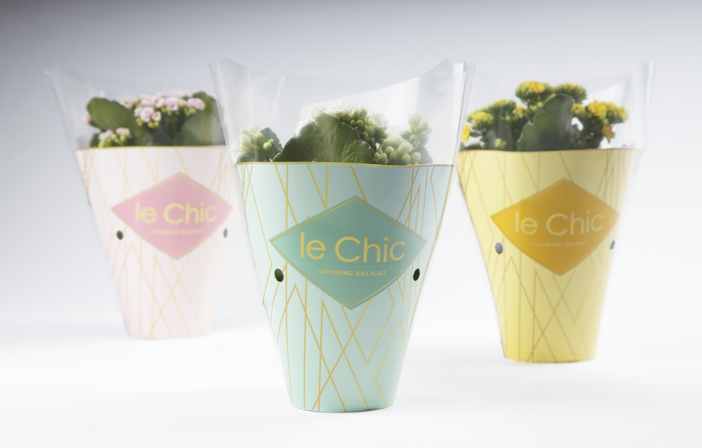 potcovers packaging design